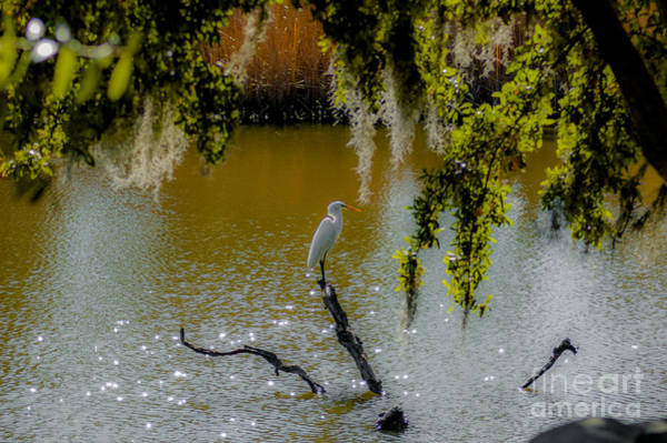 Photograph - Egret by Dale Powell