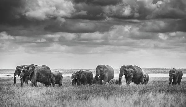 Wild Grass Photograph - Elephant Family by Vedran Vidak