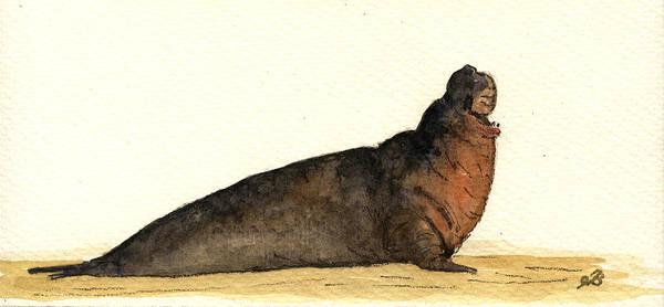Wall Art - Painting - Elephant Seal by Juan  Bosco