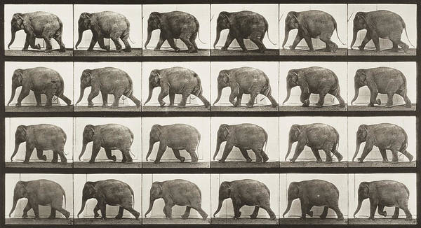 High Jump Painting - Elephant Walking by Celestial Images