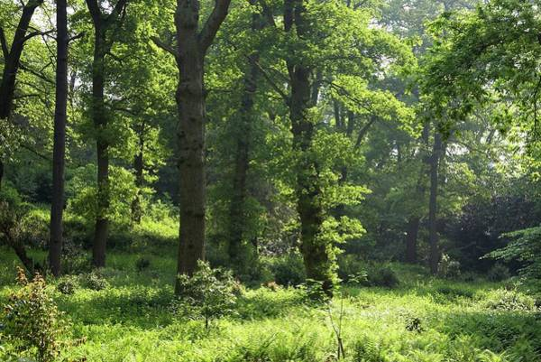 Castle Garden Photograph - Enchanted Wood by Rachel Warne/science Photo Library