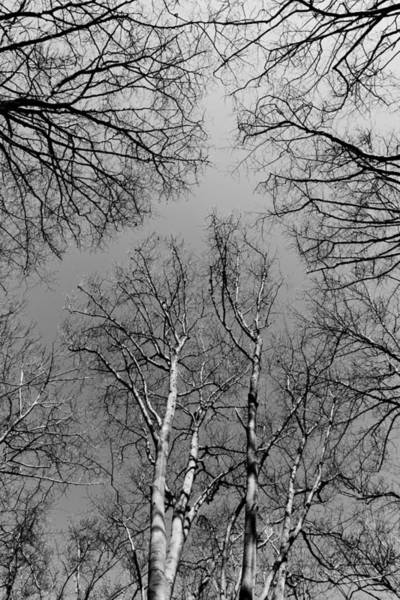 Wall Art - Photograph - English Forest Trees by David Pyatt