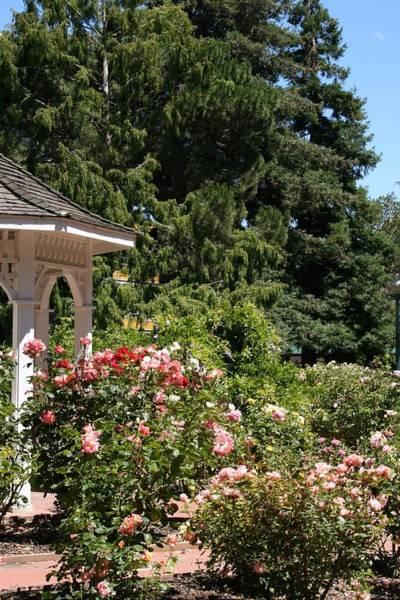 Photograph - English Garden by Cynthia Marcopulos