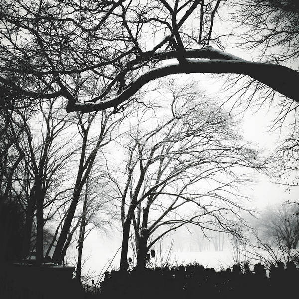 Photograph - Enveloped by Natasha Marco
