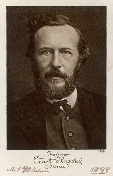 Wall Art - Photograph - Ernst Haeckel  German Scientist At Age by Mary Evans Picture Library
