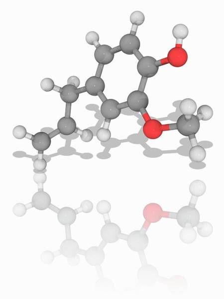 Wall Art - Photograph - Eugenol Organic Compound Molecule by Laguna Design/science Photo Library