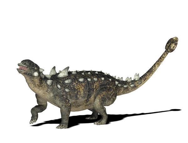 Canadian Fauna Photograph - Euoplocephalus Dinosaur by Friedrich Saurer