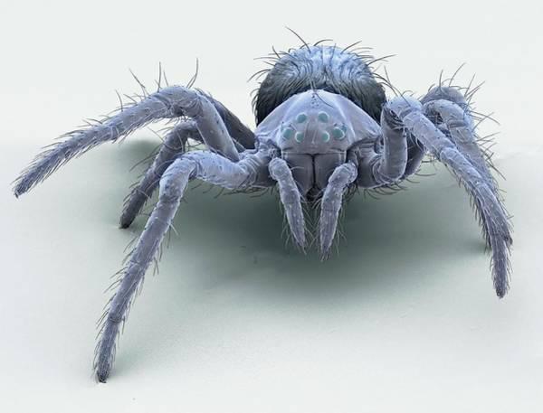 Orb Weaver Photograph - European Garden Spiderling by Steve Gschmeissner