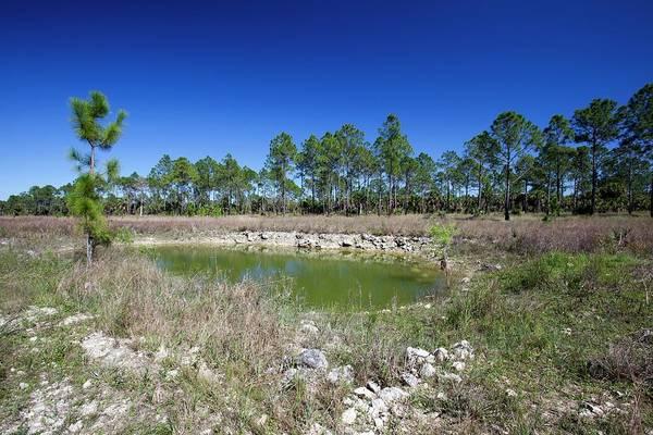 Drainage Photograph - Everglades Restoration by Jim West