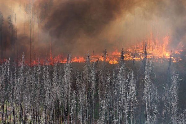 Wall Art - Photograph - Experimental Fire In Beetlekill Forest by Peter Essick
