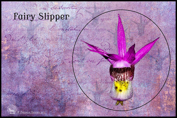 Photograph - Fairy Slipper by Fred Denner