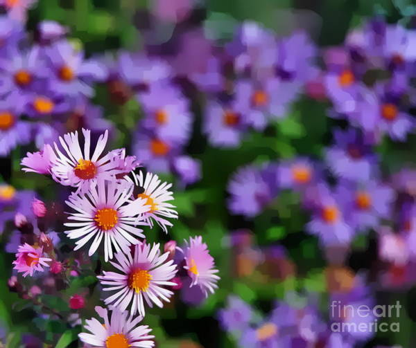 Photograph - Fall Aster  by Andrea Kollo