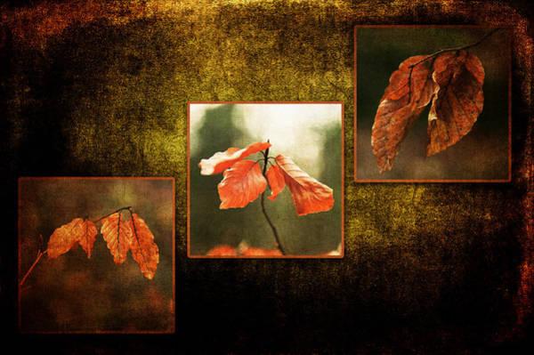 Photograph - Fall Collection by Randi Grace Nilsberg