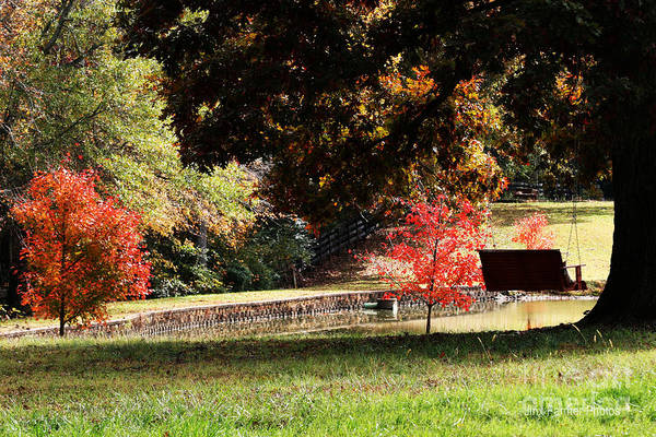 Fall Colors Art Print by Jinx Farmer