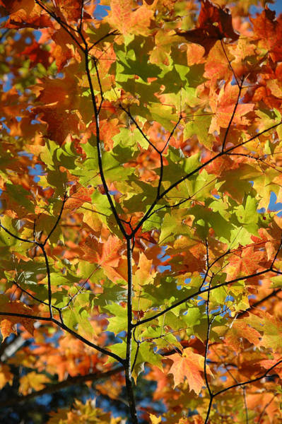 Photograph - Fall Colours.  by Rob Huntley