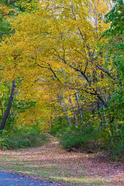 Photograph - Fall Foliage At Caumsett State Historic Park Preserve by Susan Jensen