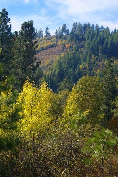 Photograph - Fall In Spokane by Ben Upham III