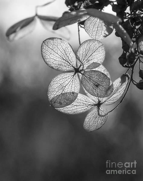 Photograph - Fall Leaves by Steven Ralser