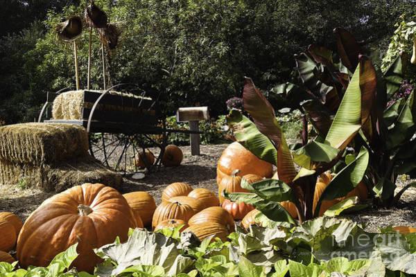 Photograph - Fall Season Items On Display by Richard J Thompson