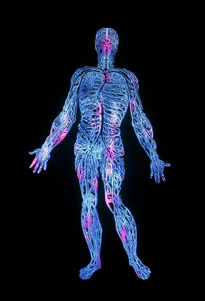 De Humani Corporis Fabrica Photograph - False-colour Engraving Of The Venous System by Mehau Kulyk/science Photo Library