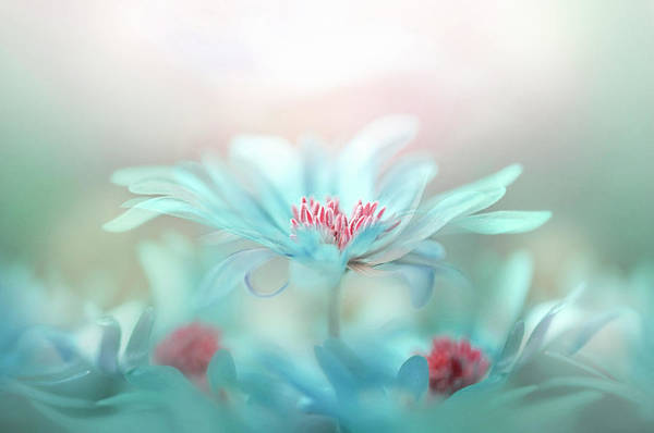 Tender Photograph - Fantasy by Jacky Parker