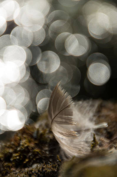 Photograph - Feather Light by Marilyn Wilson