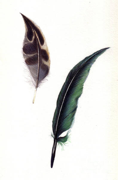 Painting - Feathers by Alessandra Di Noto