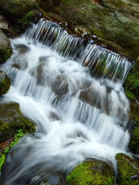 Photograph - Fern Spring Yosemite by Jeff Lowe