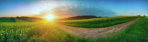 Wall Art - Photograph - Field At Sunset by Wladimir Bulgar/science Photo Library