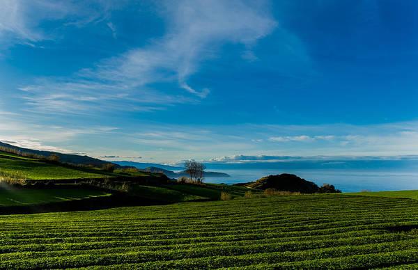 Photograph - Field Of Tea by Joseph Amaral