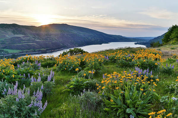 Rowena Photograph - Fields Of Balsamroot And Lupine by Darrell Gulin
