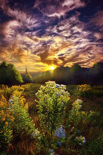 Photograph - First Light by Phil Koch
