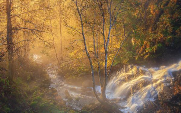 Birch River Photograph - First Light by Rune Askeland