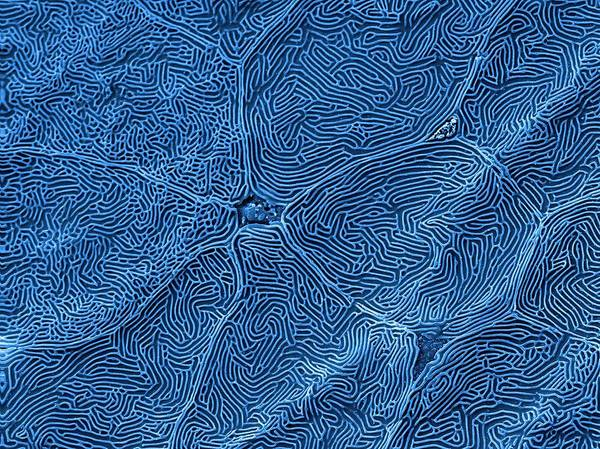 Wall Art - Photograph - Fish Scale by Kevin Mackenzie / University Of Aberdeen / Science Photo Library