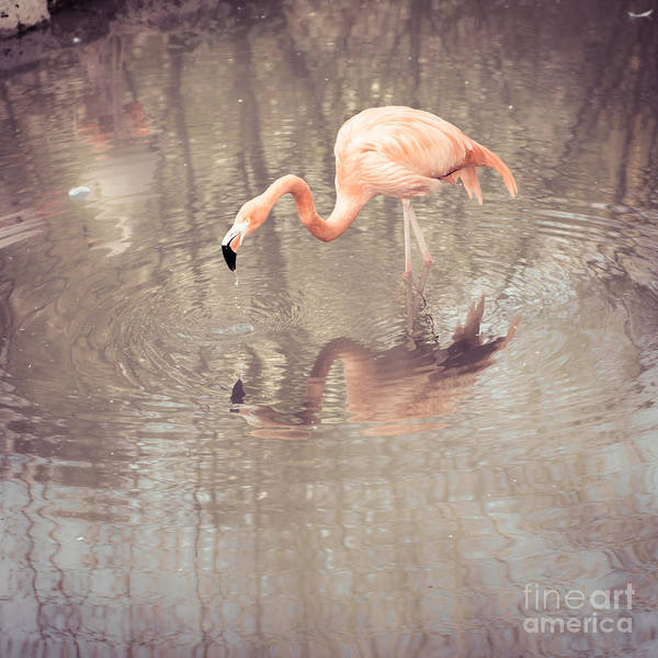 Photograph - Flamingo by Hannes Cmarits