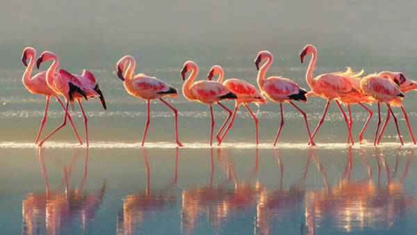 Wall Art - Photograph - Flamingo by Phillip Chang
