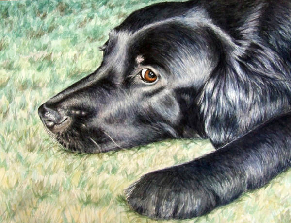Hund Wall Art - Painting - Flat Coated Retriever by Nicole Zeug