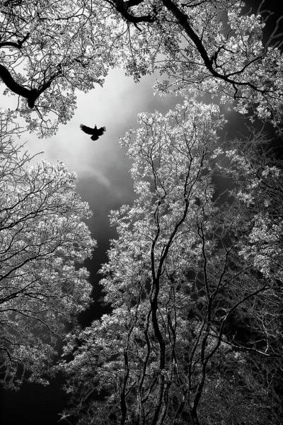 Foliage Photograph - Flight by Goran Stamenkovic
