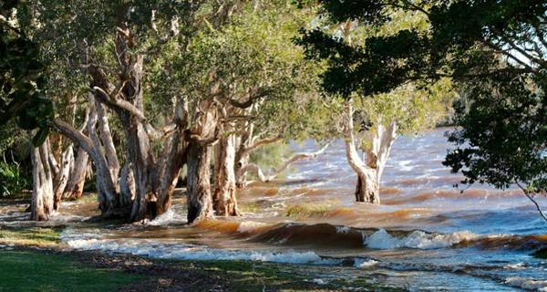 Photograph - Flooded Gums by David Rich