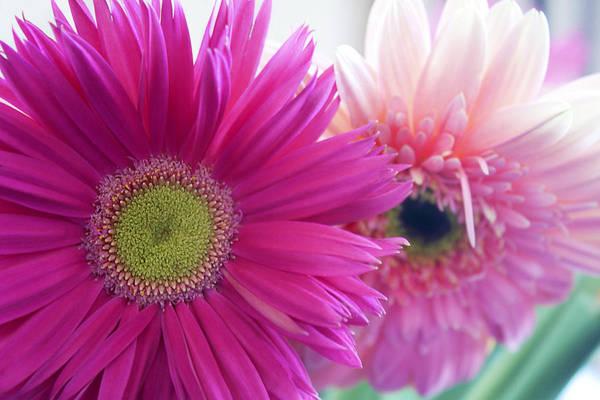 Photograph - Floral Art by Milena Ilieva