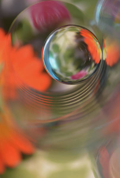 Ripples Photograph - Floral Sphere by Heidi Westum