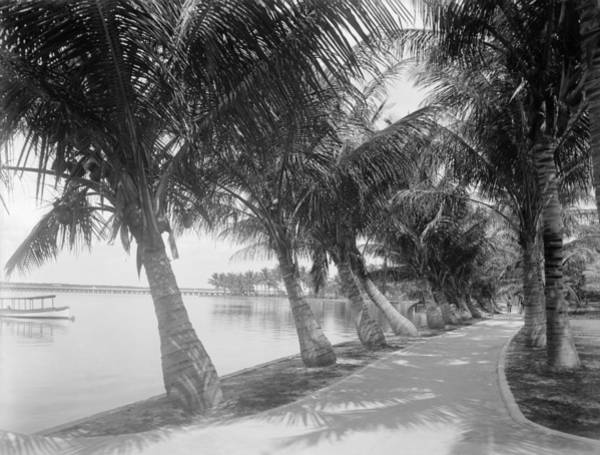 Wall Art - Photograph - Florida Palm Beach, C1884 by Granger