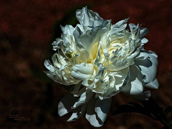 Photograph - Flower by Ludwig Keck