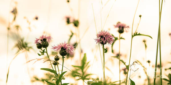 Photograph - Flower Meadow by Hannes Cmarits