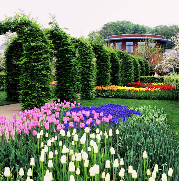 Keukenhof Wall Art - Photograph - Flowers At A Garden by Adrian Thomas/science Photo Library