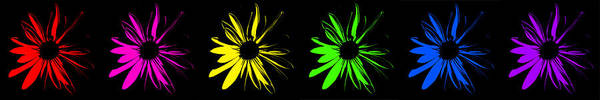Digital Art - Flowers On Black by Maggy Marsh