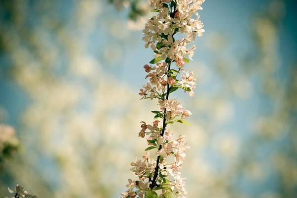 Photograph - Flowers With Blue Sky by Raimond Klavins