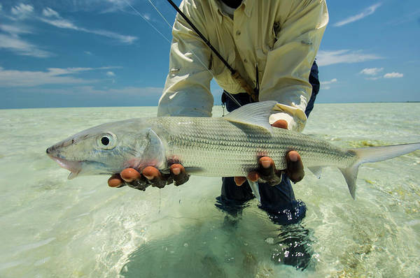 Island In The Sky Photograph - Fly Fishing In The Bahamas by Mark Lance