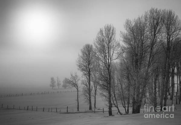 Wall Art - Photograph - Fog And Fences by Idaho Scenic Images Linda Lantzy