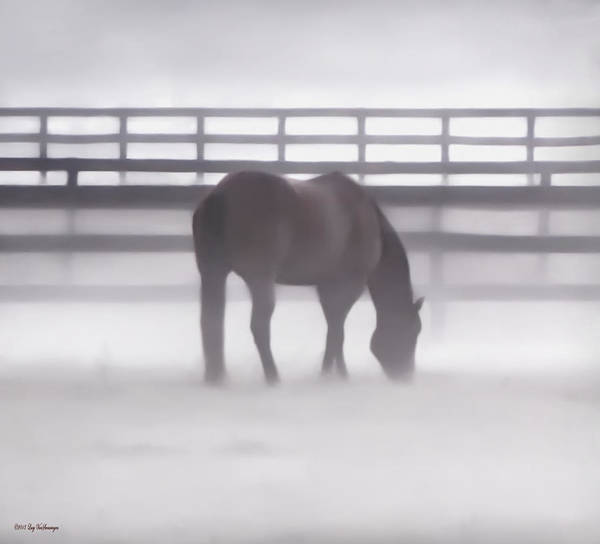 Photograph - Foggy Morning  by Lucy VanSwearingen